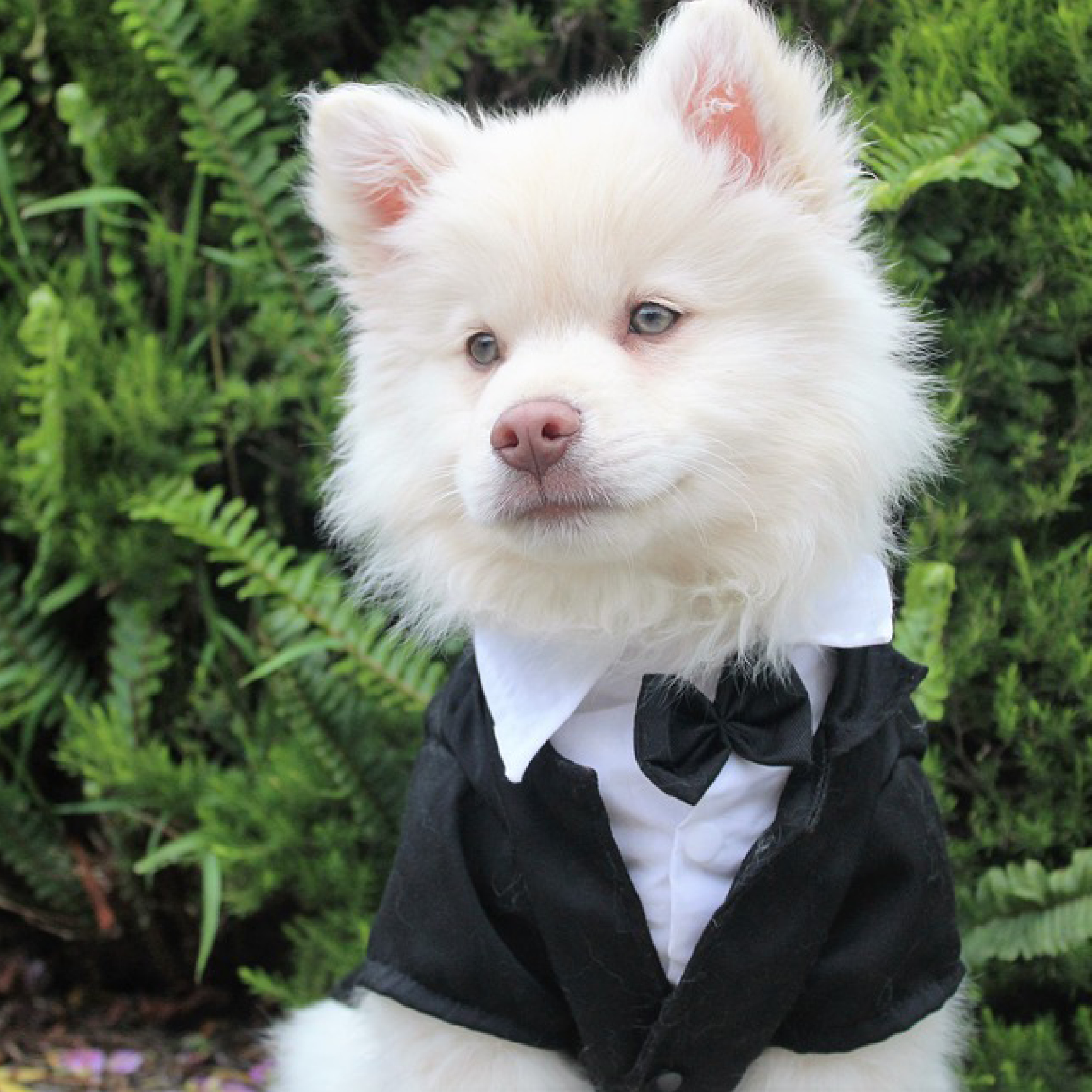 Animals at weddings, dogs at weddings, best dog, dog ring bearer, dog page boy